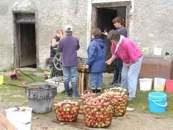 Apfelernte und Apfelsaftpressen