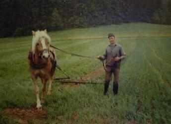 Feldarbeit früher - mit dem Pferd