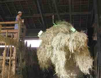 Heu mit dem Greifer in den Heustock - Ferien auf dem Bauernhof