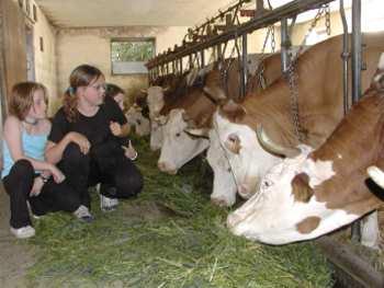 Urlaub auf dem Bauernhof - Kuhstall