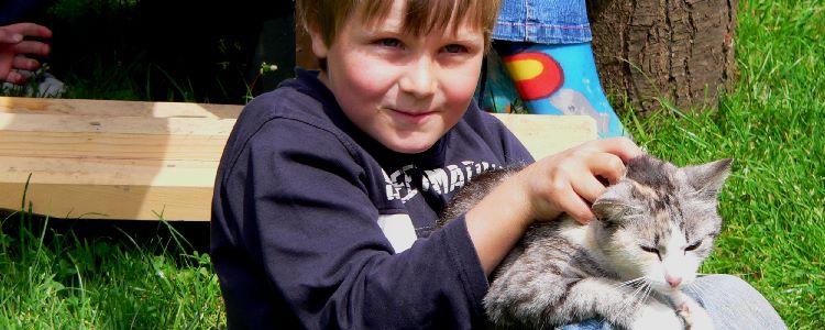 Streichelzoo am Bauernhof Streicheltiere Katzen, Hasen, Schafe