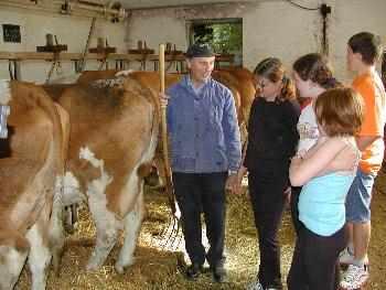 Bauernhoferlebnisse Kuhstall - Ferien in Bayern