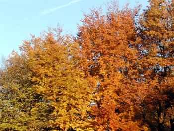 Herbsturlaub in Bayern Herbstferien am Bauernhof