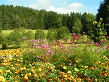 Sommerwiese Erholung und Entspannung für Jung und Alt