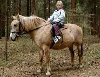 Deutschland Reiterferien im Bayerischen Wald