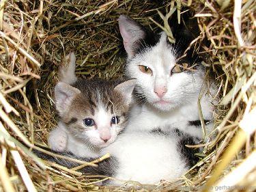 Tiere am bauernhof Katzen Mutter mit Jungen Kätzchen im Stroh Nest