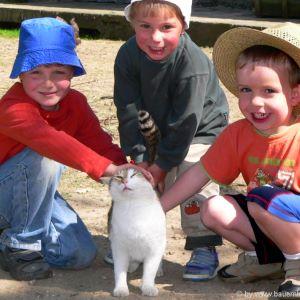 bayern-kinderbauernhof-familienurlaub-katzen-streicheltiere